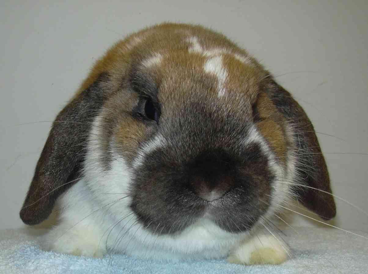caring for dwarf rabbits pets world